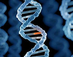 Причины и последствия соматических мутаций
