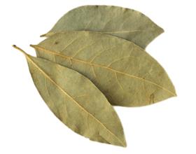 Лавровый лист — польза и вред для здоровья